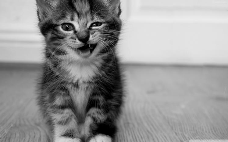 funny_kitten-wallpaper-1280x800.jpg